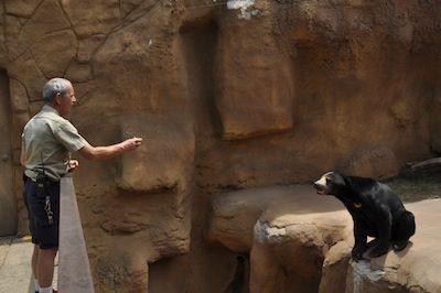 Steve Parker, a zookeeper at the Little Rock Zoo, gives a sun bear a treat.